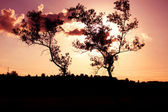 Trees silhouette over sunset — Stock Photo
