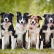 Group of happy dogs sittingon the grass — Stock Photo