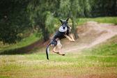 Frisbee black sheepdog catching — Photo