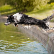 Royalty-Free Stock Photo: Border collie jumps into the water