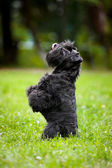 Cute dog sitting on his hind legs — Stock Photo
