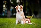 Little puppy and his award cup — Stock Photo