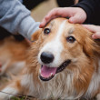 Children caress red border collie dog — Photo