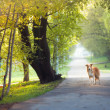Dog walking in the spring park — Stock Photo #22344203