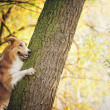 Happy dog border collie at the tree — Stock Photo #22344209