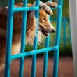 Dog playing in the playground — Stock Photo #22344291