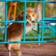 Dog playing in the playground — Stock Photo #22344315