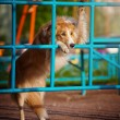 Dog playing in the playground — Stock Photo #22344323