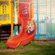 Stock Photo: Border Collie dog jumps on the playground