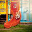 Border Collie dog jumps on the playground — Stock Photo #22344459