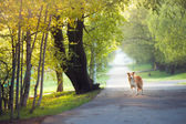 Dog walking in the spring park — Stock Photo
