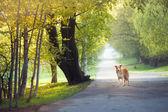 Perro paseando por el parque de primavera — Foto de Stock