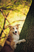 βόλτα σκυλού στο πάρκο άνοιξη — Stock fotografie
