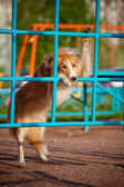 Dog playing in the playground — Stok fotoğraf