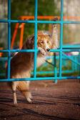 Perro jugando en el patio de recreo — Foto de Stock