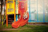 Bordercollie hond springt op de speelplaats — Stockfoto