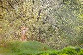 Border collie dog in spring — Stock Photo
