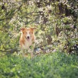 Royalty-Free Stock Photo: Border collie dog blinks in spring