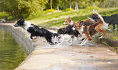 Dogs team jumping in the water — Stock Photo
