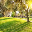 Lawn in city park under evening light — Stock Photo