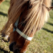 Stock Photo: Pony