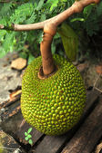 Jackfruit — Stock Photo