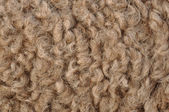 Camel hair — Stock Photo