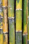 Bambúes — Foto de Stock