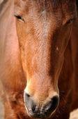 Des pferdes — Stockfoto