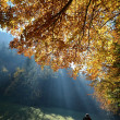 Stock Photo: Forest with sun beam in autumn