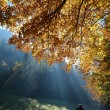 Foto Stock: Forest with sun beam in autumn