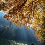 floresta com raio de sol no outono — Foto Stock