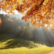 Forest with sun beam in autumn — Stock Photo