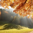 Forest with sun beam in autumn - Stock Photo