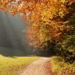 Forest with sun beam in autumn — Stock fotografie