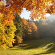 Forest with sun beam in autumn — Stockfoto