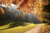 Forest with sun beam in autumn — Стоковое фото