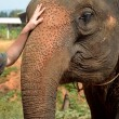 Stock Photo: Friendship between elephant and man