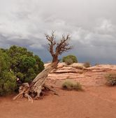 Parque de caballo muerto árbol seco — Foto de Stock