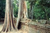 Ta Prom Temple at Angkor — Stock Photo