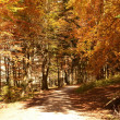 Autumn forest in mountain — Stock Photo #31226839