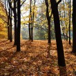 Autumn forest on top of the mountain — Stock Photo #33540839