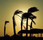 Sunrise on Caribbean beach — Stock Photo