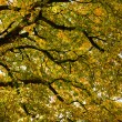 Under the canopy of the chestnut in autumn - Stock Photo