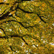 Under the canopy of the chestnut in autumn - Stock fotografie