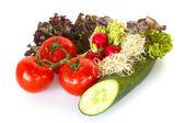 Lettuce, tomatoes, radishes, cucumber and alfalfa — Stock Photo