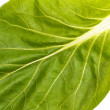 Close up of pak choi (Brassica rapa) leaf - Stock Photo