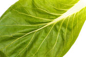 Close up of pak choi (Brassica rapa) leaf — Stock Photo