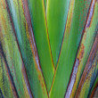 Closeup of side of Wild Banana plant — Stock Photo