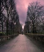 神秘园 — 图库照片
